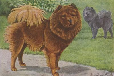 Two Chow Dogs Standing
