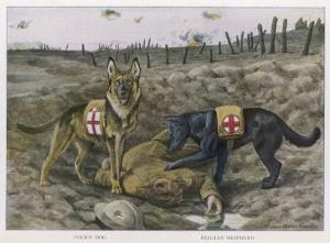 Two Red Cross Rescue Dogs a German Shepherd by Louis Agassiz Fuertes