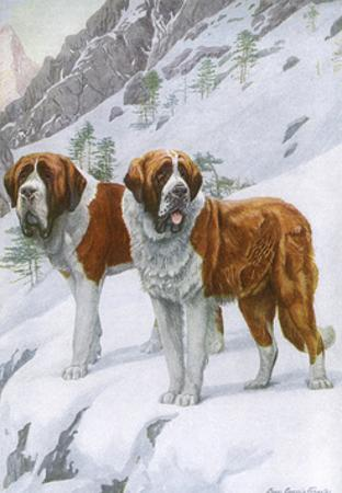 Two St Bernards in Snow