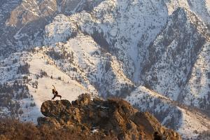 Woman Practices Yoga in Front of Mt. Olympus, Salt Lake City, Utah by Louis Arevalo