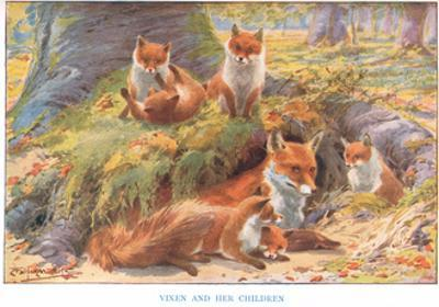 Vixen and Her Children, Illustration from 'Country Ways and Country Days' by Louis Fairfax Muckley