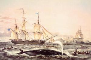 Whaling Off the Cape of Good Hope by Louis Lebreton