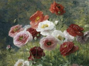Poppies by Louis Marie Lemaire