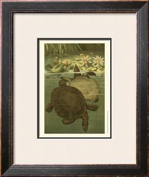 Pond Turtles by Louis Prang