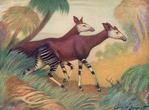Animal, Okapi 1909 by Louis Sargent