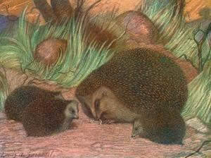 Hedgehog and Young 1909 by Louis Sargent