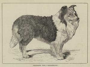 Celebrated Dogs, Charlemagne by Louis Wain