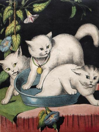 Three White Cats and Tub