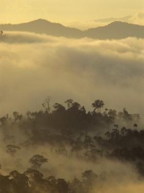 Dawn Light Silhouettes the Trees of the Rainforest, Danum Valley, Sabah, Island of Borneo, Malaysia by Louise Murray