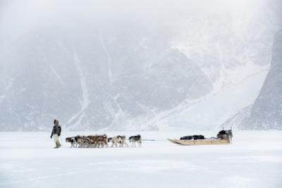 Inuit Hunter Walking His Dog Team on the Sea Ice in a Snow Storm, Greenland, Denmark, Polar Regions