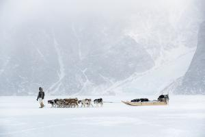 Inuit Hunter Walking His Dog Team on the Sea Ice in a Snow Storm, Greenland, Denmark, Polar Regions by Louise Murray