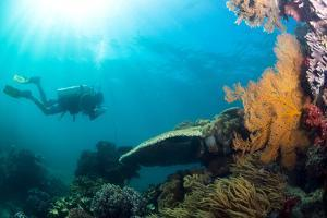 Scuba Diver Swimming with Gopro in Coral Landscape Scenic at Thetford Reef by Louise Murray