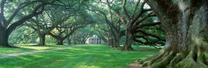Louisiana, New Orleans, Oak Alley Plantation, Plantation Home Through Alley of Oak Trees