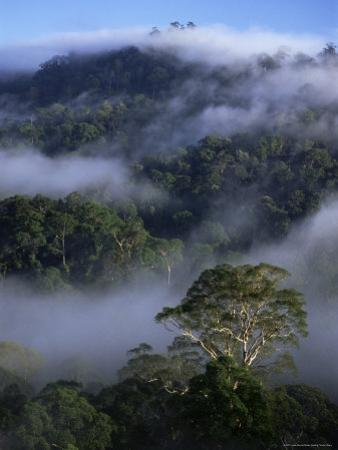Canopy of Virgin Dipterocarp Rainforest, Danum Valley Conservation Area, Sabah, Island of Borneo by Lousie Murray