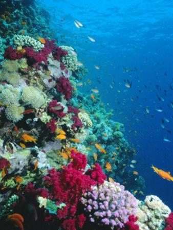 Huge Biodiversity in Living Coral Reef, Red Sea, Egypt by Lousie Murray