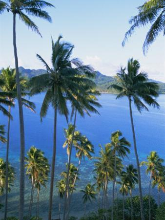 Palm Trees at Matangi Island, Qamea Island in Background, Fiji, South Pacific Islands by Lousie Murray