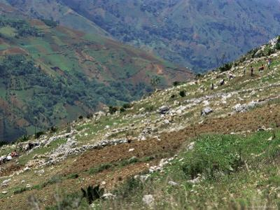 People Working in Steep Mountain Fields, at 2000M, Haiti, West Indies, Central America by Lousie Murray