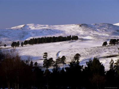 Pines on Winter Hillside, Cairngorm Mountains, Deeside, Highland Region, Scotland by Lousie Murray