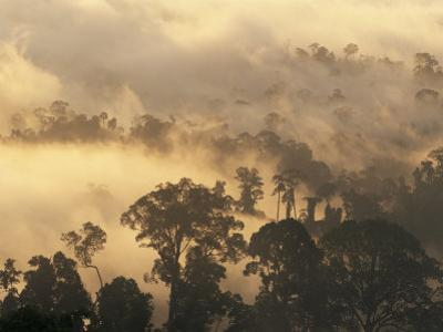 Rain Forest, Borneo, Southeast Asia by Lousie Murray