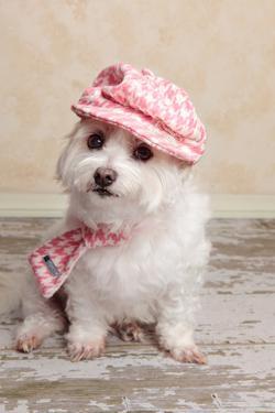 Trendy Cute Dog by lovleah