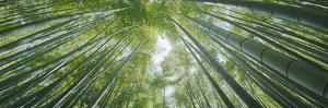 Low Angle View of Bamboo Trees, Hokokuji Temple, Kamakura, Kanagawa Prefecture, Kanto Region, Ho...