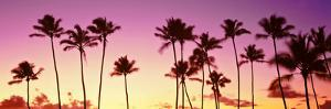 Low Angle View of Palm Trees, Waikiki Beach, Honolulu, Oahu, Hawaii, USA