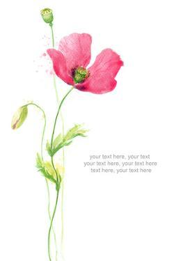 Painted Watercolor Card with Poppy and Text by lozas