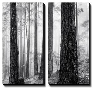 Capilano Forest by Lsh