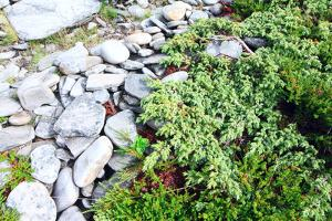 Stones and Moss in Lapland by lubastock