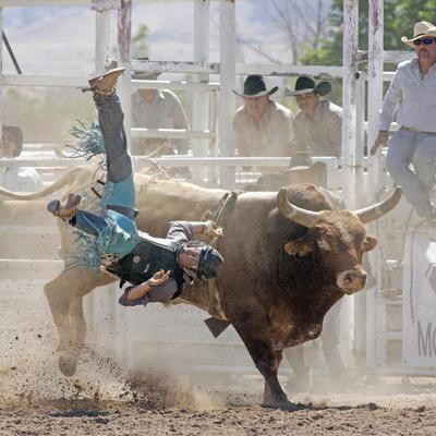 Competitor Falling from His Mount During the Bull Riding Competition, Socorro, New Mexico, Usa
