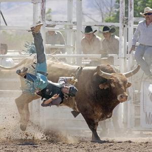 Competitor Falling from His Mount During the Bull Riding Competition, Socorro, New Mexico, Usa by Luc Novovitch