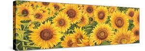 Field of Sunflowers by Luca Villa