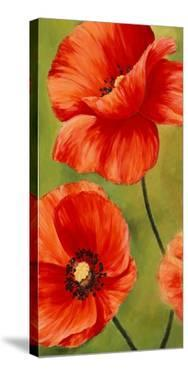 Poppies in the wind I by Luca Villa