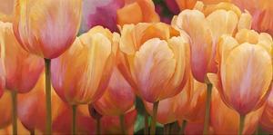 Summer Tulips by Luca Villa