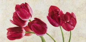 Tulip Concerto by Luca Villa
