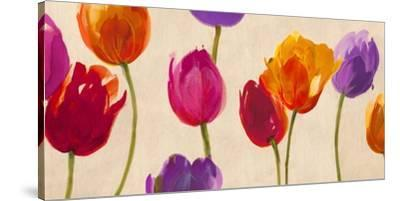 Tulips & Colors