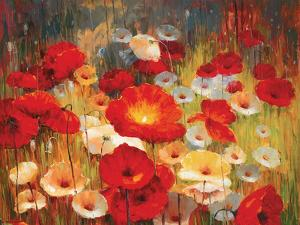 Meadow Poppies I by Lucas Santini