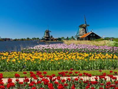 Windmill in Holland by lucasantilli