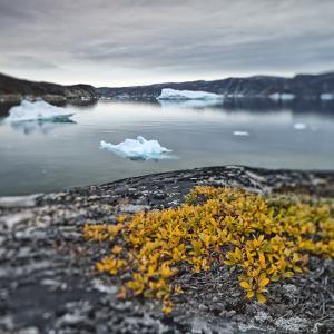 Greenland, Diskobay, Reefs, Sea with Icebergs by Luciano Gaudenzio