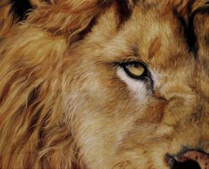 Eye of the Lion by Lucie Bilodeau