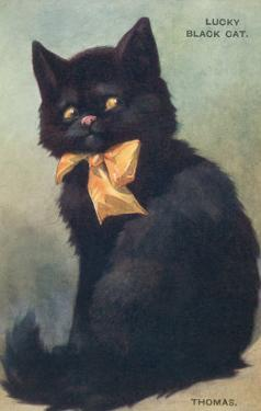 Lucky Black Cat with Bow