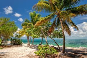 Palm Beach. Palm Trees on a Beach, Caribbean Sea by lucky-photographer