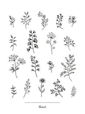 Herbarium Blomst by Lucy Francis