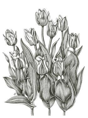Tulip Cluster by Lucy Francis