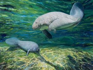 Crystal River Manatee by Lucy P. McTier