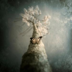 A Small Butterfly Sitting on a Tree with Overlaid Textures by Luis Beltran