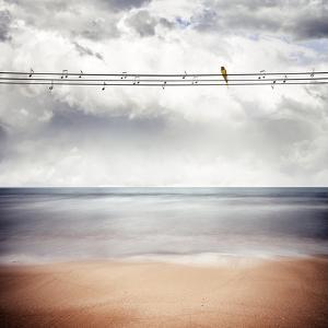 A Yellow Bird Sitting on a Wire by Luis Beltran
