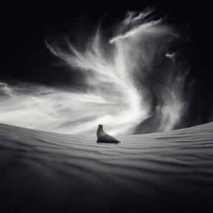 Desierto by Luis Beltran