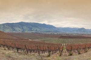 Santa Cruz Vineyard in Colchagua Valley by Luis Davilla
