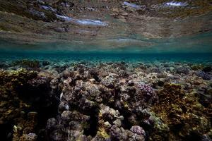 Coral and Other Marine Life in a Fringe Reef on Ant Atoll by Luis Lamar